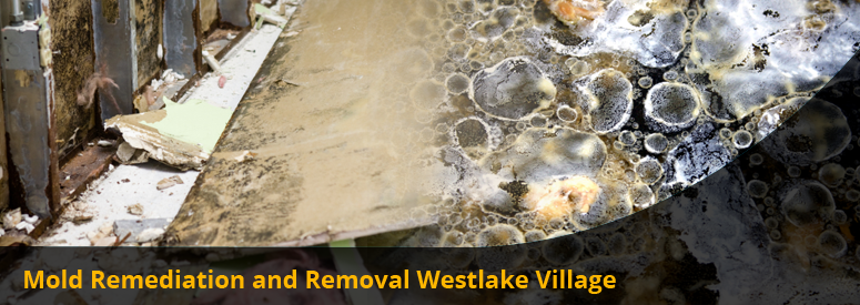 Mold Remediation and Removal Westlake Village CA